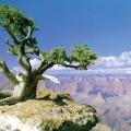 Parque Nacional del Gran Cañon