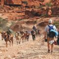 Gran Cañon - Excursiones a pie y en mula